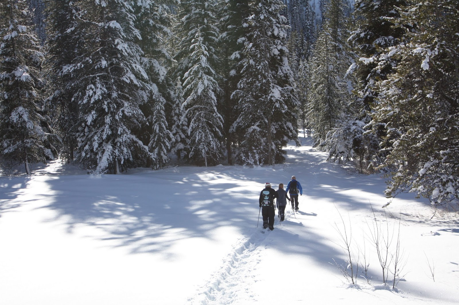 Twenty acres and NO sheep   : Christmas Day Snowshoeing