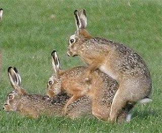 Bunny Penis 49