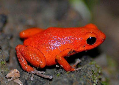 Facts Around Us Top 15 Beautiful Colorful Poison Frogs