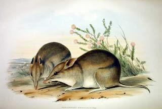 marsupiales de Australia en peligro de extincion