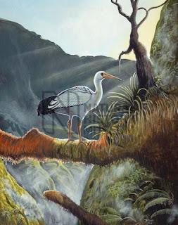 ibis de Reunion Threskiornis solitarius