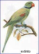 cotorra de las Seychelles Psittacula wardi aves extintas de las Seychelles