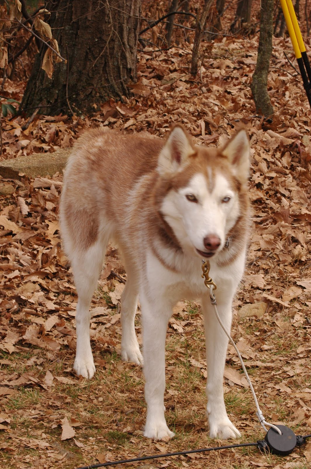 Maryland Sled Dog Adventures Llc State College Pa Tow