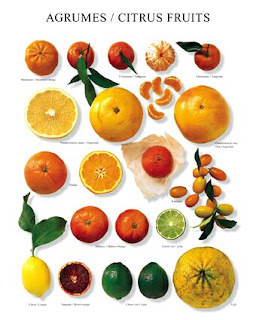 good latest design really comfortable papille vagabonde: Nuovi trend : nuovi agrumi e nuovi aromi ...