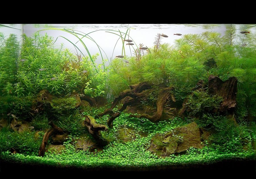 Aquatic Eden - Aquascaping Aquarium Blog