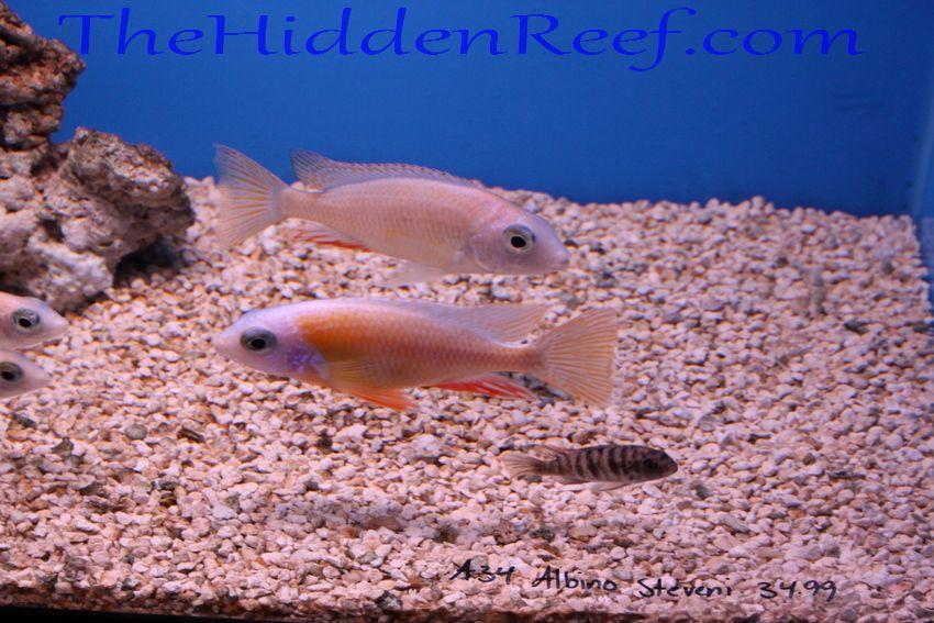 Unique Fish Tank Decorations The Hidden Reef: Uniqu...