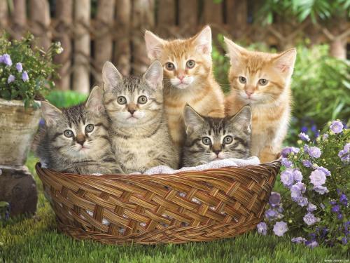 Super Amici cuccioli: Piccoli gattini TR44
