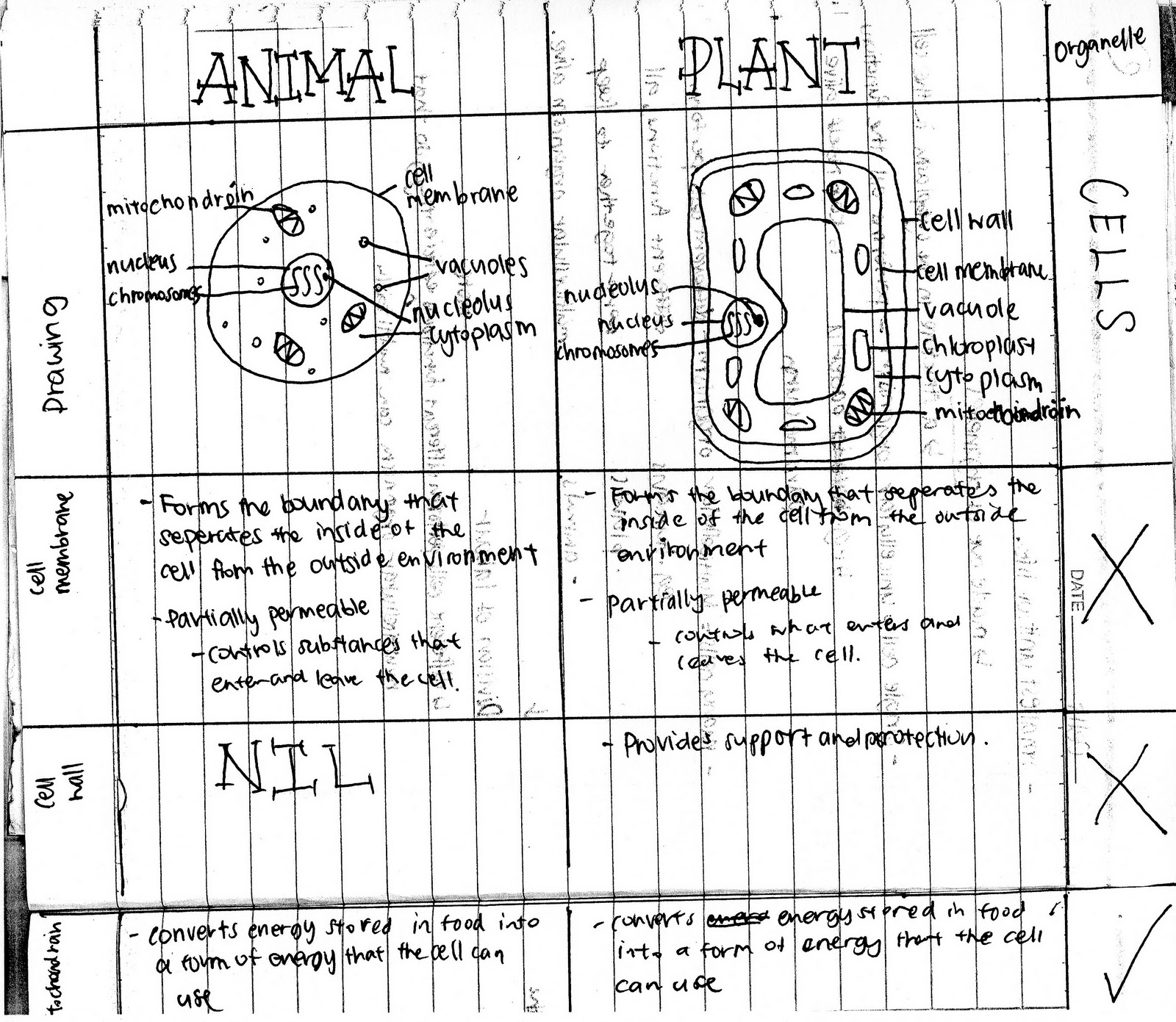 We Love Cellz Differences Of Plant Cell And Animal Cell