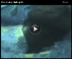 Oil Spill Video Writing Prompts