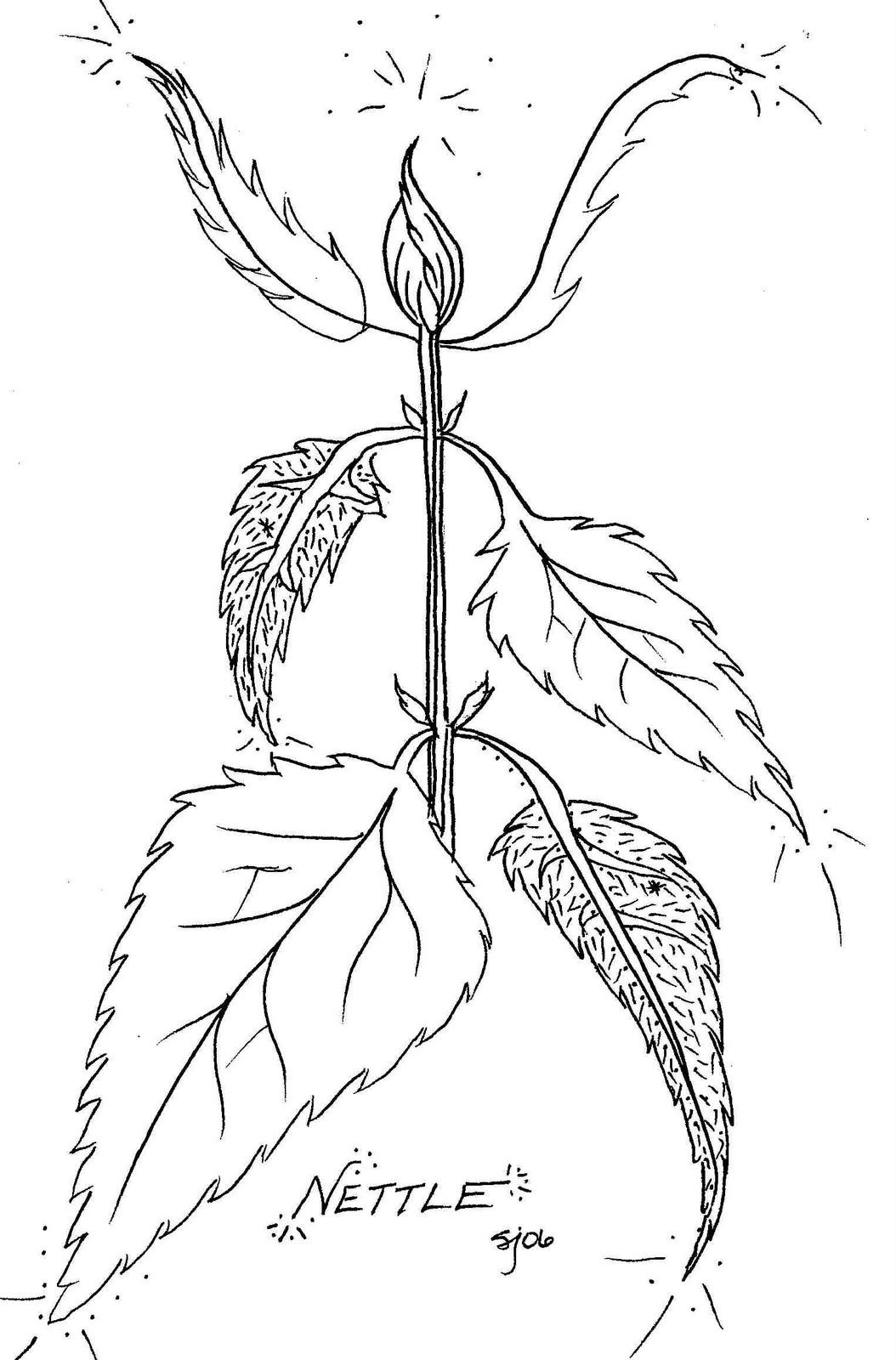 Wild and Free: Stinging Nettle