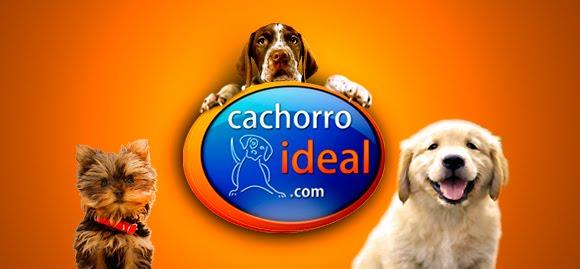 Como escolher o cachorro ideal?