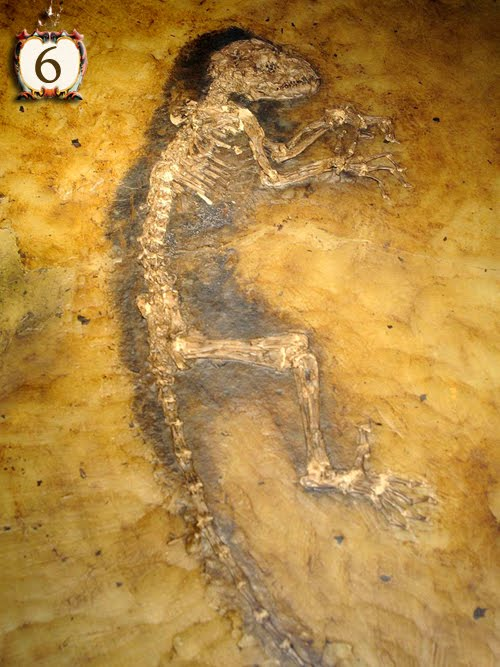10 The Oldest Things On Earth Top Strange Things