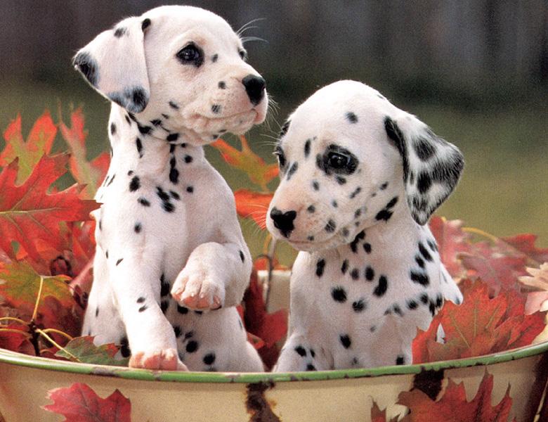 cute puppies pic3 - Cuidados com Filhotes de Cães Recém-Nascidos