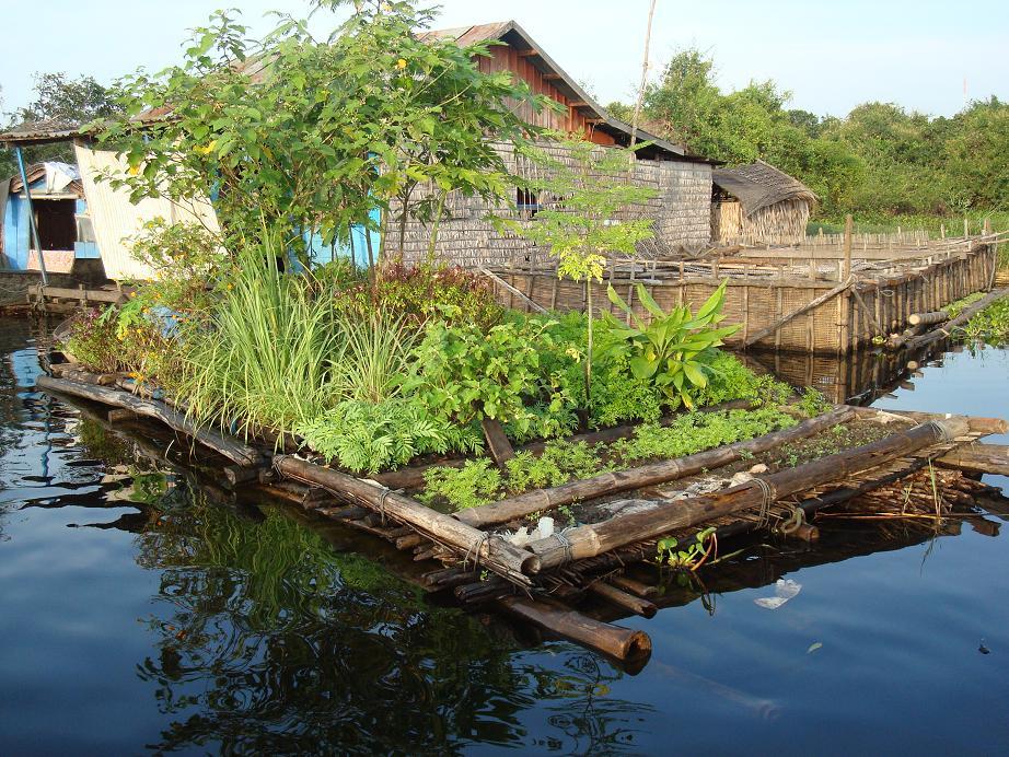 gardens and gardening in Cambodia