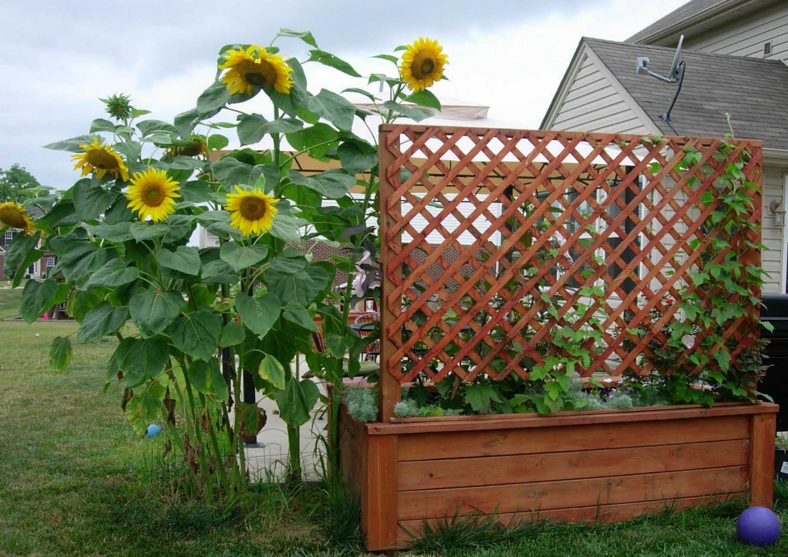 http://2.bp.blogspot.com/_dzcYab2oe30/S_Q85BCT9xI/AAAAAAAAAuo/AaBVh9K7a24/s1600/garden4.jpg