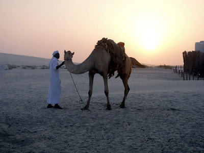 man and camel going home