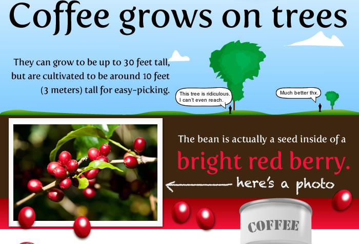 Coffee Berries Are Picked Dried And Stripped Down Until All That Is Left A Green Bean Once Shipped The Beans Roasted To About 260c