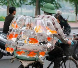 Mobile Goldfish