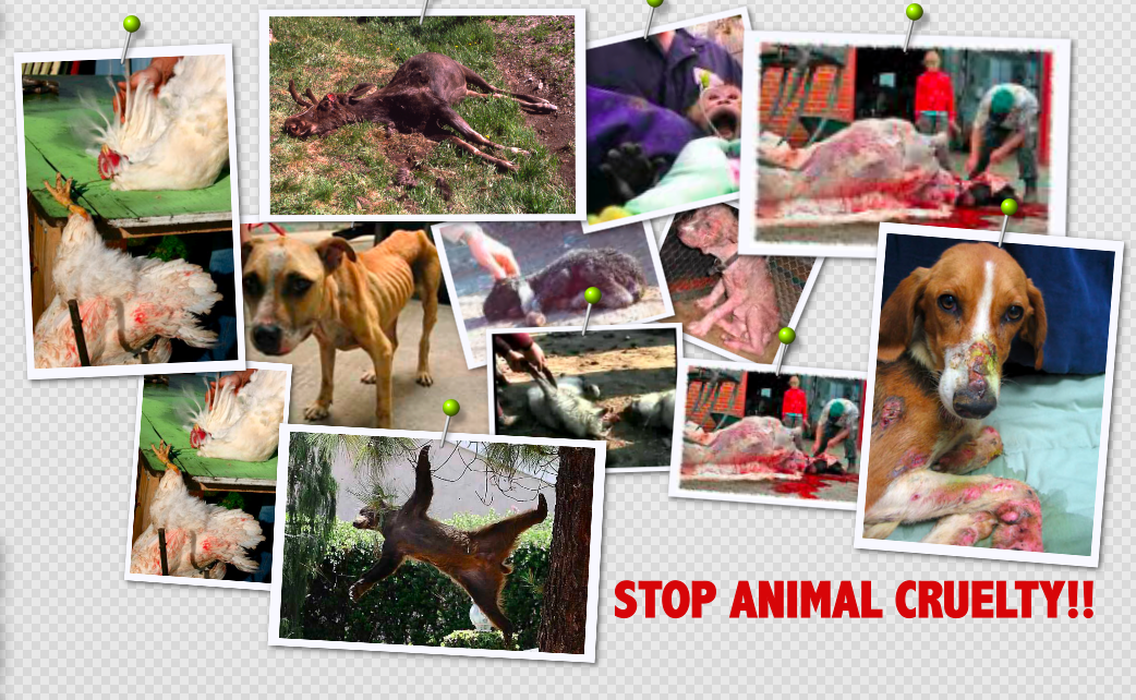 the duty of humans to stop animal abuse Animal and companion animal to human  identify appropriate safety equipment to prevent companion animal to companion  where there is a duty to report animal abuse.