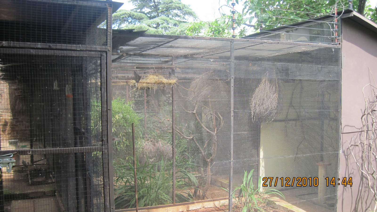 Doves For Sale >> RAS Avichat: Getting Started by building your first aviary