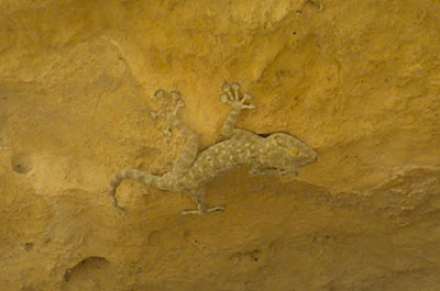 A lizard I found inside a small cave beside old Smakieh)