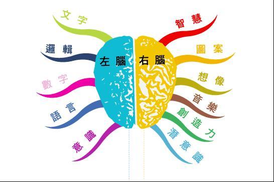 美言之意: 左右腦的功能
