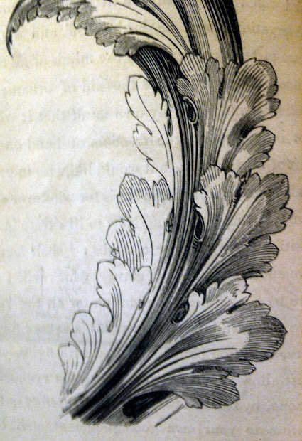 How to Draw Acanthus Leaves