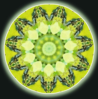green bug mandala