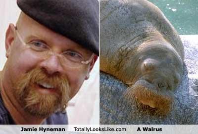 Walrus GIFs Search | Find, Make & Share Gfycat GIFs