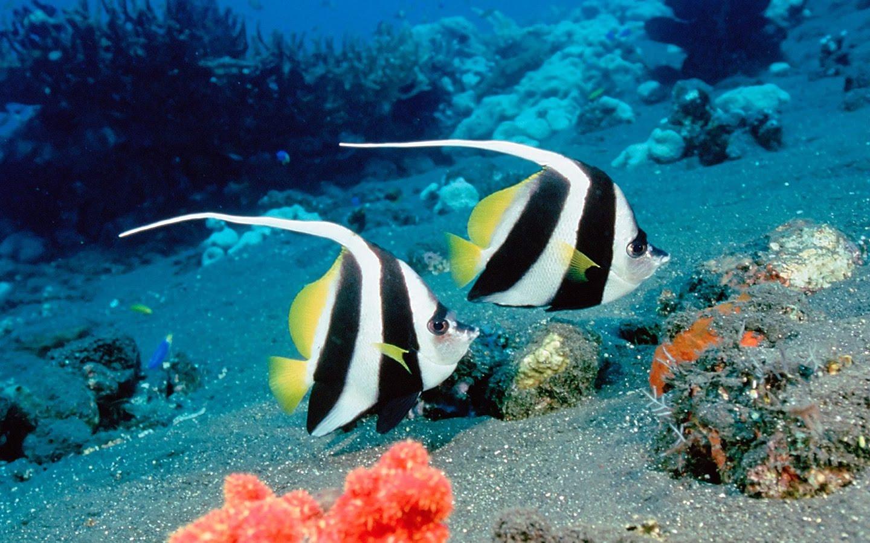 Beautiful Sea Fish High Quality Wallpaper 1440 X 900 Hd