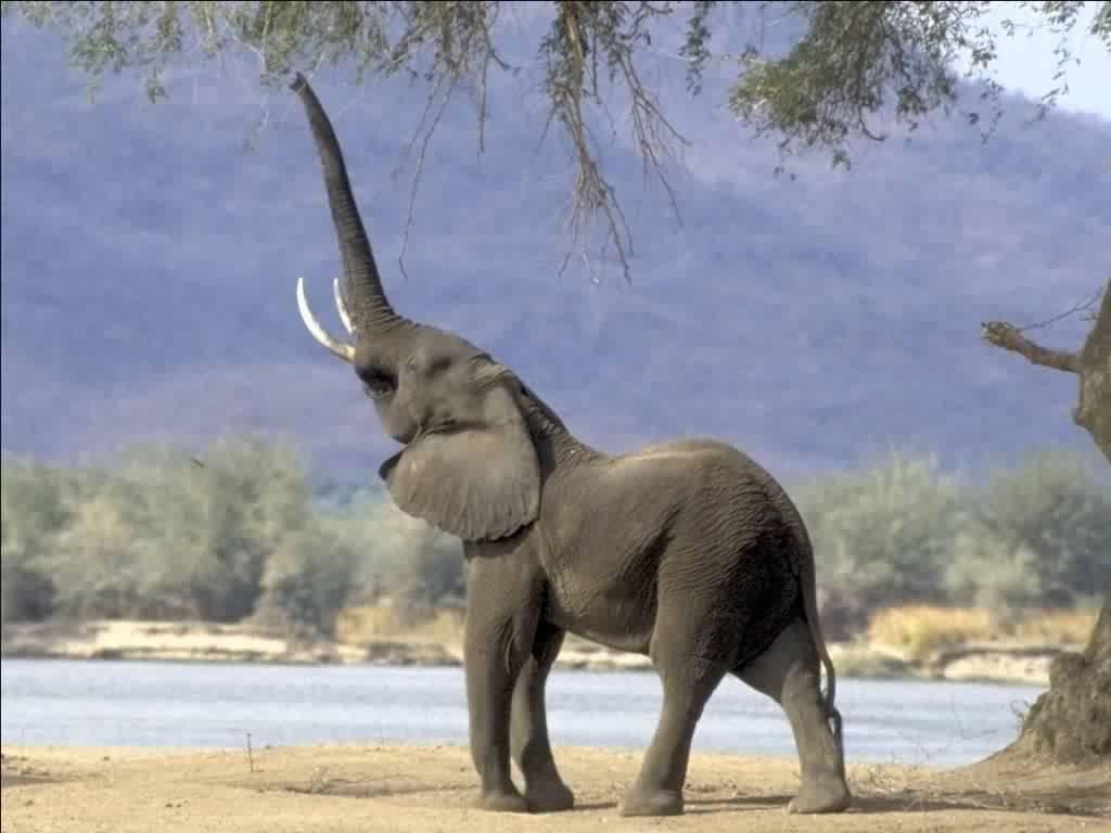 CHOPSHOP: Elephants' trunk
