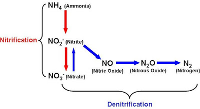 its a micro world after all the nitrogen cycle