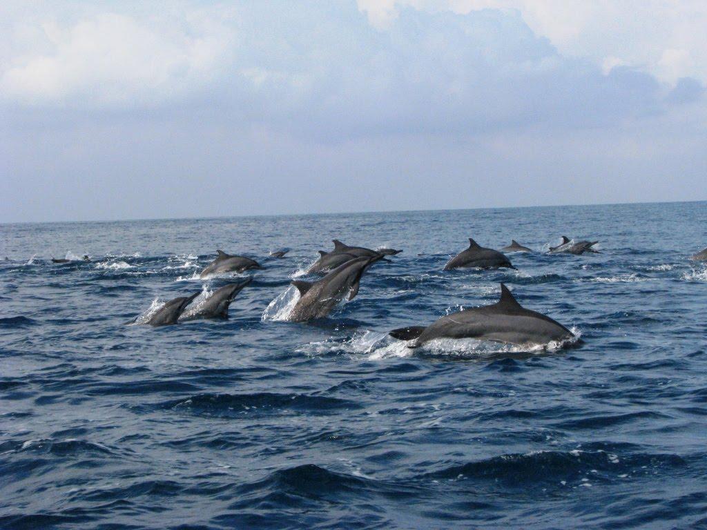 red_sunset_beach Sun Dolphin Bali 12