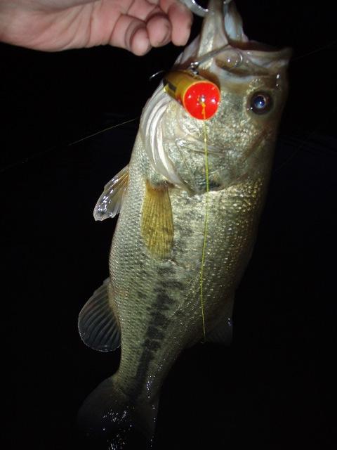 Chug chug rush at ease chugger spook for Fish stocking near me