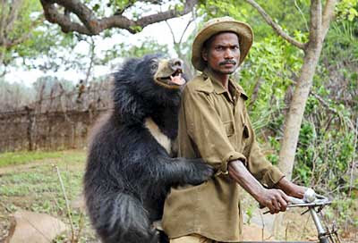 Nothing To Do With Arbroath: Indian sloth bears evacuated ...