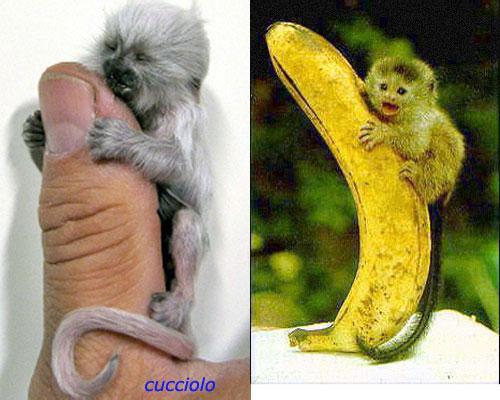gli animali possono essere omosessuali Torre del Greco