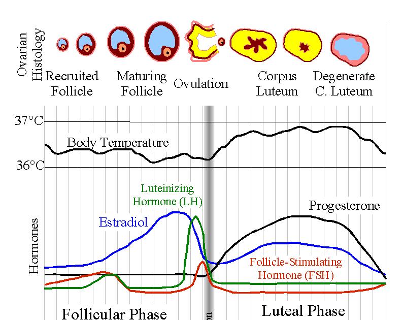 Diet Dalam Waktu 1 Bulan, Coba 6 Metode ini! Ada Diet Siklus dan Diet Paleolitik
