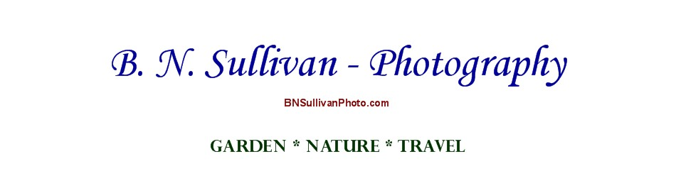 B N Sullivan Photography