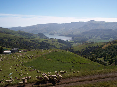 Sheep farm near Port Levy, New Zealand
