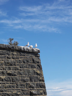 Gulls at Taiaroa Head