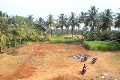 Village Scenes Coconut Trees