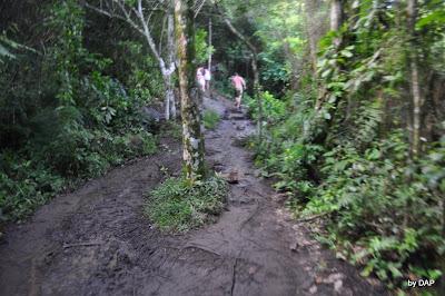 trilha lopes mendes lama ilha grande angra dos reis brasil rj