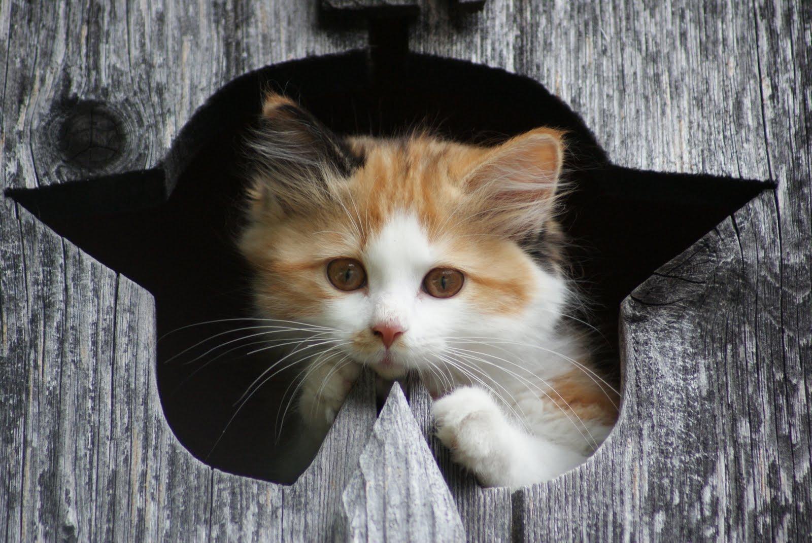 Kleine Katzen Sind So Drollig Mit Liebe Zum Detail