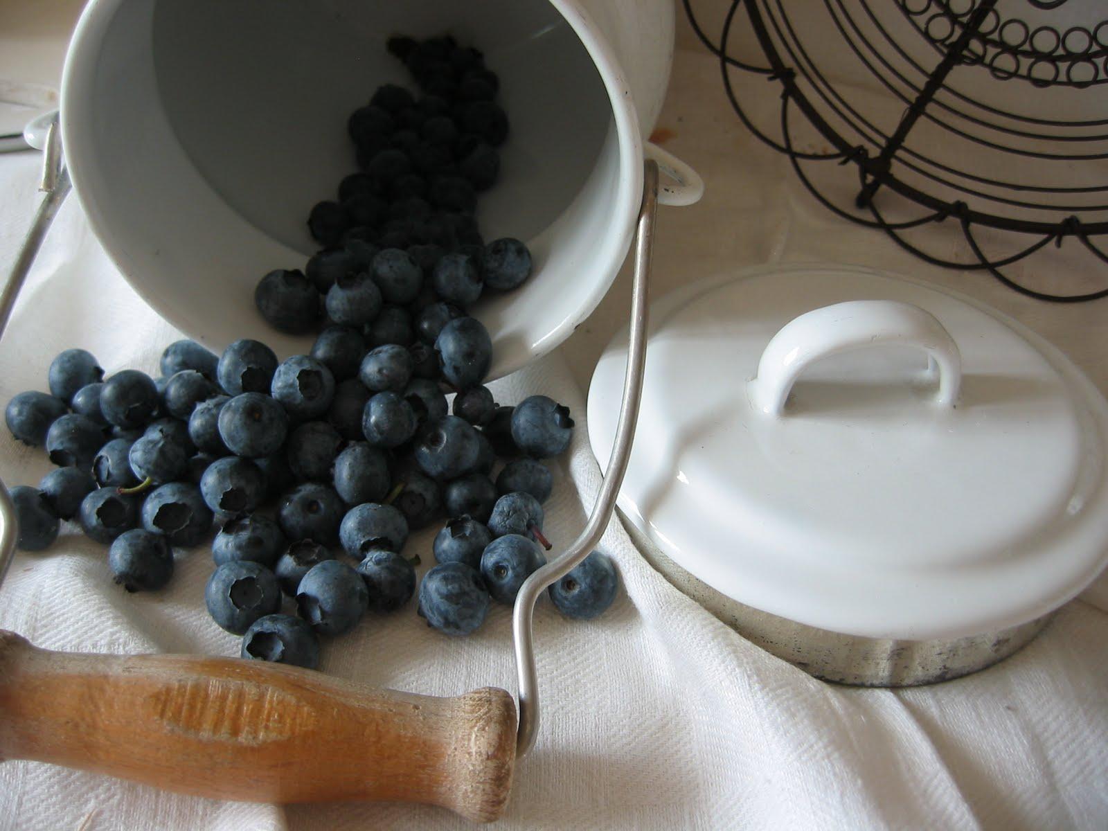 Haben Sie schon Früchte der Wald-Heidelbeere gekostet schmecken fantastisch !
