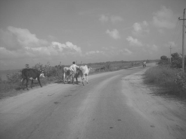 Ananth's Travel Dairies: Talakkadu-Shivanasamudra