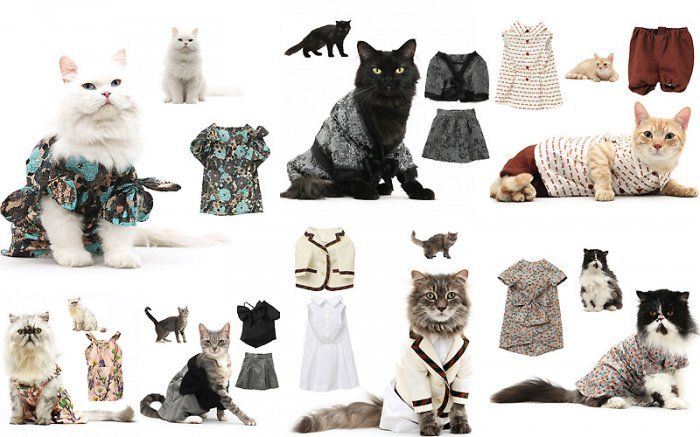 What's with fashionable cats