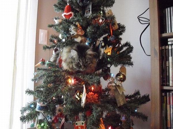 12 Ft Christmas Trees