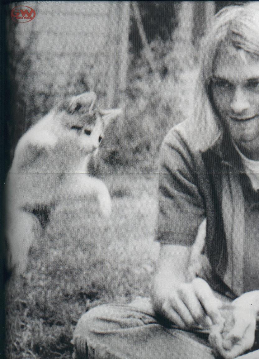 The Cat Ladies Kurt Cobain Amp Cats