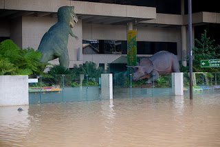 Queensland Museum flood damage, 2011.