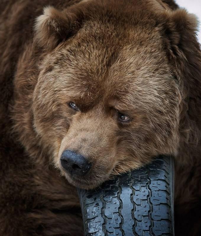 Viernes 33 >> Una Ventana al Mundo: Impresionantes fotos de animales